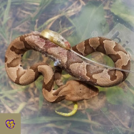 Photo of Copperhead Research