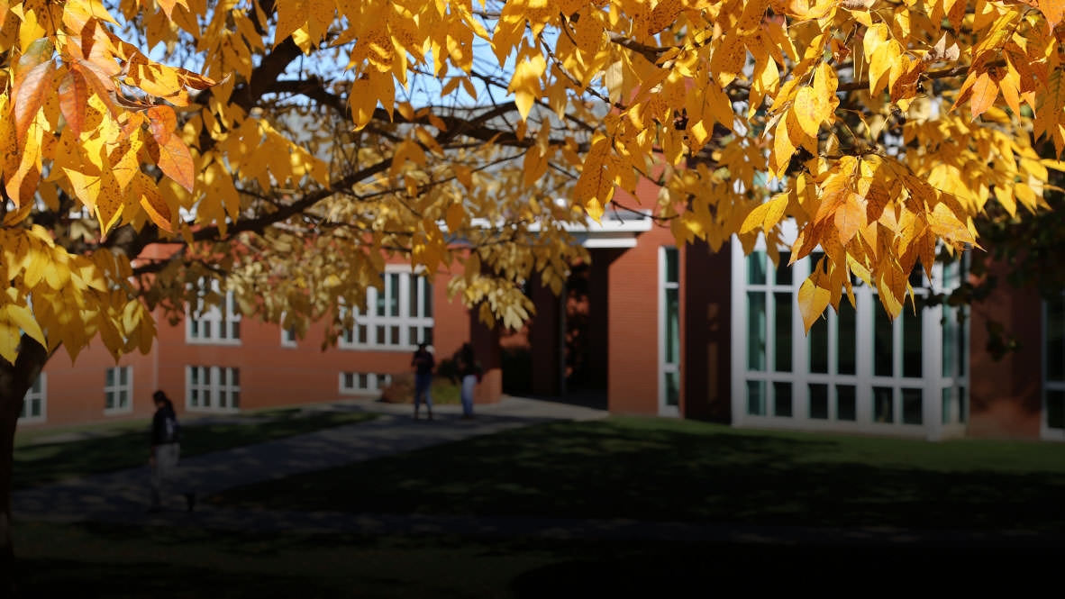 Photo of Fall Leaves on Campus