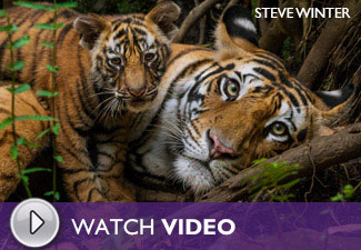 Play the Steve Winter, Wildlife Photographer: On the Trail of the Big Cats Video